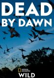 Watch Movie Dead by Dawn - Season 1