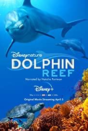 Watch Movie Dolphin Reef